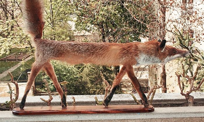 badly stuffed fox